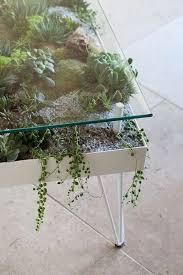 plants indoor garden