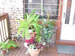 patio plants for shade patio plants for shade outdoor goods plants for patios in the shade patio plants for shade