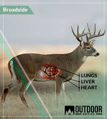Deer Vitals Chart Where To Shoot A Deer 6 Kill Zone Shot Placements W