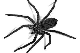 「蜘蛛」の画像検索結果