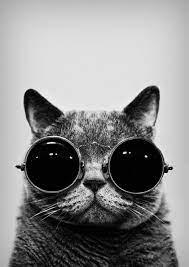 Hipster Cat iPhone Wallpapers - Top ...