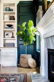 9 best Palm Plants for Home and Office images on Pinterest   Flower, Palms  and Butterfly