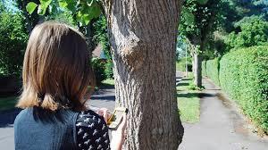 Find An Arborist Tree Expert Tree Risk Assessment