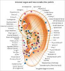 Auriculotherapy Chart Points Auriculotherapy Hashtag On Twitter