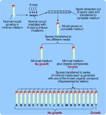 Protein Synthesis Flow Chart Key Dna And Protein Synthesis S Cool The Revision Website
