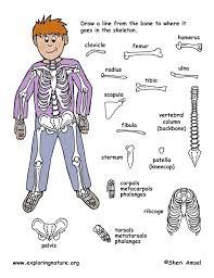 Skeleton Game and Worksheet (Older Students)
