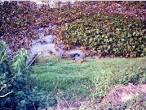 imagem de Poconé Mato Grosso n-17