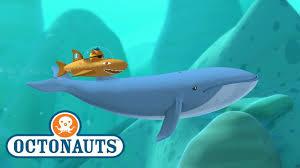 octonauts blue whale sea creature encounter cartoons for kids underwater sea education