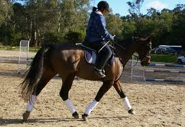 latest news donvale adult riding club photo s from adam wootten clinic 2012
