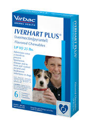 ivermectin for fleas. Perfect For IVERHART PLUS Ivermectinpyrantel Flavored Chewables Inside Ivermectin For Fleas I