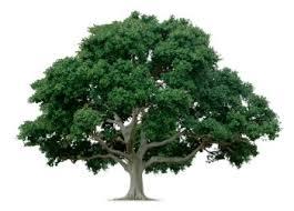 Prophetic ArticleYour Life Is A Tree Bearing FruitApostle NgaboTree Bearing Fruit