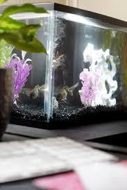 office desk aquarium. Fish Aquariums: Decor For Home And Office Life Desk Aquarium