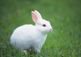 essay on rabbit in english for kids my pet