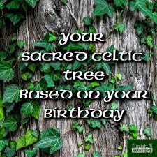 Celtic Tree Chart Birthstones Zodiacs And Celtic Tree Astrology Irish