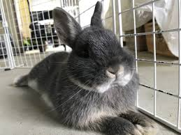 what rabbits need in their cage 10