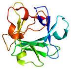 fibroblast growth factor 2
