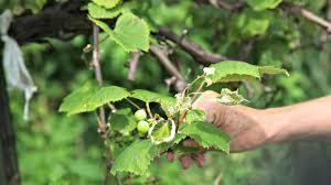 organic farming npr pesticide drift threatens organic farms