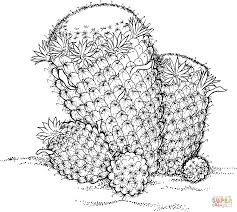 Small Picture Mammillaria Wildii Cactus coloring page Free Printable Coloring