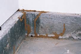 Image result for Borate works by killing termites on contact