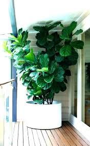 indoor pots for plants best plant stands large office pot uk