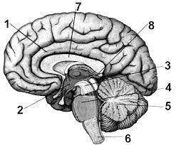 Контрольная работа по теме эндокринная система и нервная система Ч hello html 755c3ca1 png
