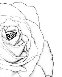 Small Picture 129 best Roses images on Pinterest Flowers Drawings and Fabric