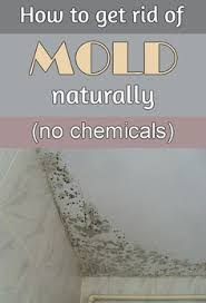 how to get rid of mold in bathroom. How To Get Rid Of Mold Naturally, Without Chemicals In Bathroom