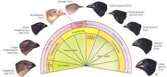 Bird Beak Chart Adaptation In Darwins Finches