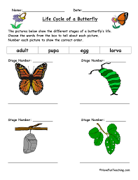 Life Cycle of a Butterfly Worksheet | Have Fun Teaching