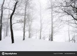 Snowfall Blizzard Lights Light Blizzard Snowfall Leafless Trees Ground Covered Snow