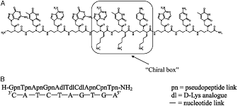 Insights Into Peptide Nucleic Acid Pna Structural Features The