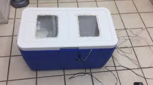 homemade cooler reptile egg incubator