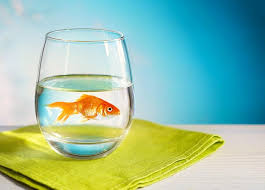 fish for office. Office Fish For