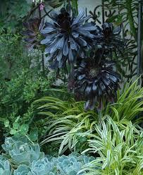 10 Outstanding Succulents