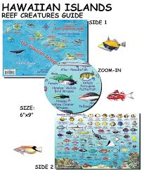Oahu Fish Chart Hawaiian Islands Reef Creatures Guide
