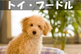 「「トイ」vs「猟犬タイプ」」の画像検索結果