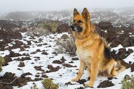 Resultado de imagen para perro en el nevado