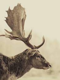 stag off canvas art