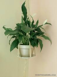 Peace Decorations For Bedrooms Plants For Bedroom Plant Bedroom Indoor Plants That Purify Air