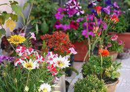 best garden plants. Flowering Plants For Home India Best In The World Types Of Plant Identification . Non- Garden