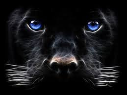 2058x1256 brown cheetah and black panther side by side hd wallpaper