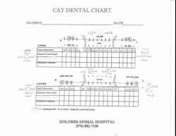 Pfizer Dental Chart Aaha Canine Dental Chart Www Bedowntowndaytona Com