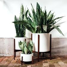 house plants poisonous houseplants indoor plants for pet owners and pas to avoid house plants that house plants