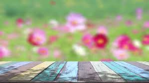 table top background hd. table top and blur nature of background stock footage video 9970796 | shutterstock hd t