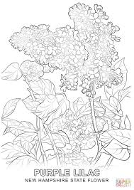 Small Picture New Hampshire State Flower coloring page Free Printable Coloring