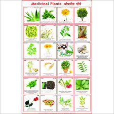 Image result for medicinal plants