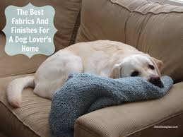 best sofa for dogs. The Best And Worst Fabrics Finishes For Dog Lover Home Lovers Velvet Sofa Hair Harvey Red Dogs