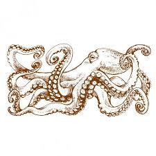 Fotka Chobotnice S Chapadly Ručně Kreslenou Perokresby Vektorové