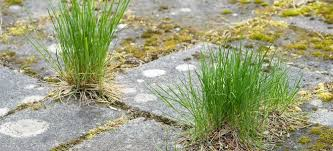 Patio stones with grass in between Checkerboard How To Kill Weeds Between Patio Paving Stones Tyberinainfo How To Kill Weeds Between Patio Paving Stones Doityourselfcom