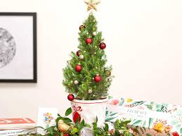 Cherry Blossom Light Tree Bunnings You Can Now Get Tiny Living Christmas Trees Delivered To
